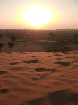 Rajasthan : le désert pour démarrer